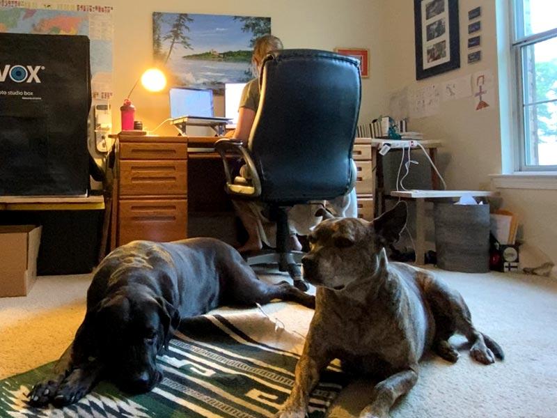 Tazboards in the Studio
